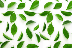 Top view shot of green leaves flat lay stock photos