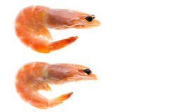 Top view of shrimp isolated background. A top view of two white shrimp Stock Photo