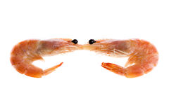 Top view of a shrimp on a white background. A top view of two isolated shrimp background Royalty Free Stock Images