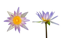 Top view and side view of lotus flower Stock Image
