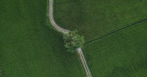 Top view from the sky looking down move along footpath beside two paddy fields stock video footage