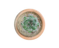 Top view of small cactus plant in pot isolate on white background royalty free stock photography