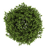 Top view of small-leaved lime tree isolated on white. Background Stock Photography