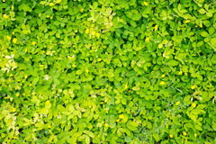 Top view of small plant leaves Royalty Free Stock Photo