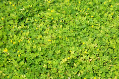 Top view of small plant leaves Royalty Free Stock Image