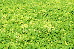 Top view of small plant leaves Stock Photography