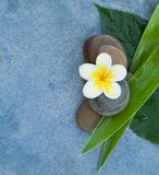 Top view of spa flower and tropical set for massage treatment.  stock image