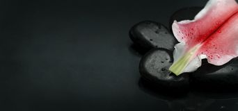 Top view of spa stones and flower petal over black background stock image