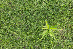 Top view sprout on grass Royalty Free Stock Photos