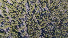 Top view on spruse forest stock video footage