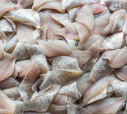Top view stack of Sliced raw, Fresh fish after filleting Royalty Free Stock Image
