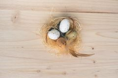 Top view of an Easter nest with orange, brown and white quail eggs decorations with feathers on wooden background. Top view of a straw Easter eggs nest with stock photos