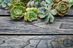Top view succulent plant on wooden background stock images