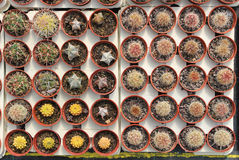 Top view of succulents and cactus Royalty Free Stock Image
