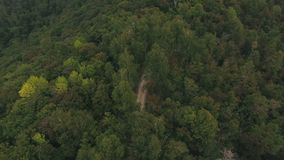 Top view of summer forest stock footage