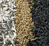 Top view of sunflower black seeds, peeled seeds and peels Royalty Free Stock Photos