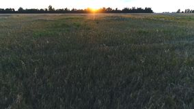 Top view on sunset over the field stock footage