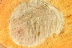 Top view of the surface of the fresh stump with annual rings closeup. For use as background. High resolution photo. Full depth of field stock image
