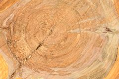 Top view of the surface of the fresh stump with annual rings closeup. For use as background. High resolution photo. Full depth of field stock images