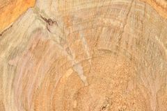 Top view of the surface of the fresh stump with annual rings closeup. For use as background. High resolution photo. Full depth of field royalty free stock image