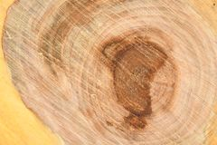 Top view of the surface of the fresh stump with annual rings closeup. For use as background. High resolution photo. Full depth of field stock photography