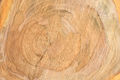 Top view of the surface of the fresh stump with annual rings closeup. For use as background. High resolution photo. Full depth of field royalty free stock photo
