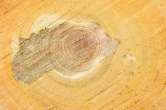 Top view of the surface of the fresh stump with annual rings closeup. For use as background. High resolution photo. Full depth of field royalty free stock images