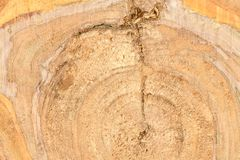 Top view of the surface of the fresh stump with annual rings closeup. For use as background. High resolution photo. Full depth of field stock photo
