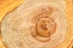 Top view of the surface of the fresh stump with annual rings closeup. For use as background. High resolution photo. Full depth of field royalty free stock photos