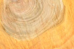 Top view of the surface of the fresh stump with annual rings closeup. For use as background. High resolution photo. Full depth of field royalty free stock photography
