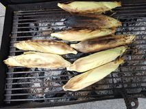 Top view of sweet and delicious corn on the Cob grilling on a Grill Royalty Free Stock Photo