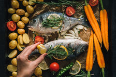 Top view of tasty dorado fish with vegetables and spices Stock Image