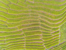 Top View of Terraced Rice Field in Hill Royalty Free Stock Photography