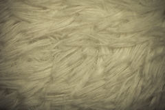 Top view on texture of white artificial fur for background. Tone Royalty Free Stock Photo