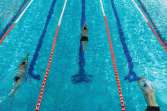 Top view of three male swimmers. Pushing off from the edge of a swimming pool Royalty Free Stock Image