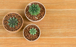 Top View of Three Potted Cactus on Brown Background. Top View of Three Potted Cactus Plants on Brown Background Royalty Free Stock Photography