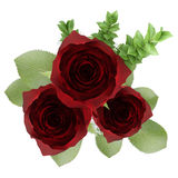 Top view of three red roses in vase isolated on white Stock Photos