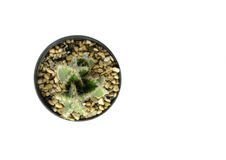 Top view of tiny potted cactus Stock Photography