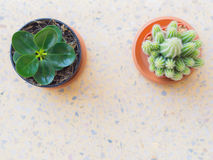 Top view, tree and Cactus tree . Stock Photography