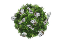 Top View of Tree Stock Photos