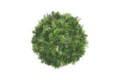 Top View of Tree Stock Photo