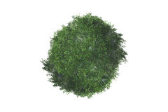 Top View of Tree Stock Image