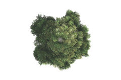 Top View of Tree Royalty Free Stock Images
