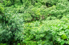 Top view of tree in rainforest at The tree house Mae maea village Stock Photography