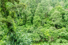 Top view of tree in rainforest at The tree house Mae maea village Stock Image