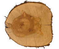 Top view of a tree stump Royalty Free Stock Image