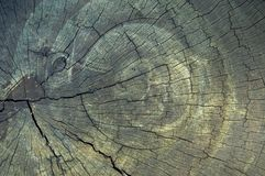 Top View of a Tree Stump. With cracks Stock Photography