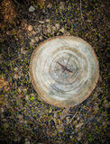 Top view of tree stump Royalty Free Stock Photos