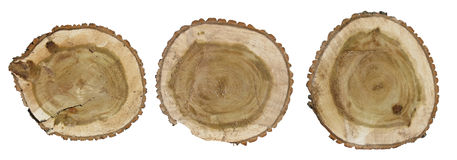 Top view of a tree stump. Stock Image
