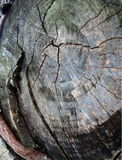 Top view of a tree stump. Top view of a weathered tree stump Royalty Free Stock Photo